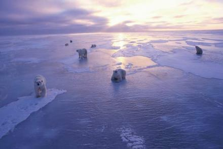 sea-ice-arctic-melting-2011